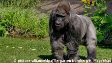 Deutschland Nürnberg Gorilla Fritz gestorben
