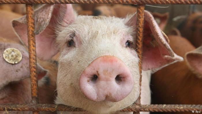 Schweinegrippe in Deutschland Flash-Galerie