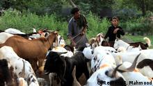 Pakistan muslimisches Opferfest