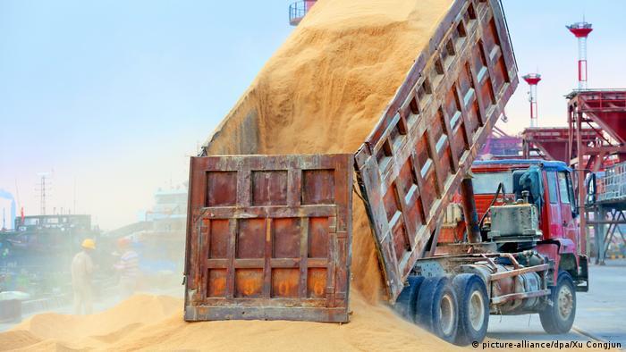 Symbolbild China - USA Strafzölle   Sojabohnen