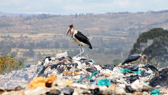A stork stands on a pile of trash