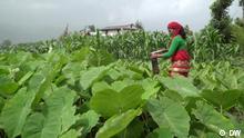 Nepal Gefahren durch Pestizide in Landwirtschaft