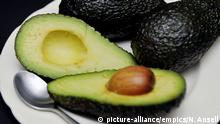 Mary Berry avocado on toast. File photo dated 21/02/13 of avocados on a plate. Mary Berry could find herself on the wrong side of avocado fans after insisting it does not belong on toast. Issue date: Tuesday February 20, 2018. The former Great British Bake Off judge, 82, said she is not on board with the trendy treat and said the fruit would be better in a prawn cocktail. See PA story SHOWBIZ Berry. Photo credit should read: Nick Ansell/PA Wire URN:35101797  