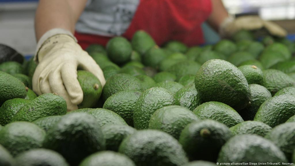 Mexico facing a guacamole crisis | Business| Economy and finance