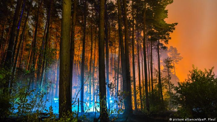 Orange smoke in the air around a forest (picture alliance/dpa/P. Pleul)
