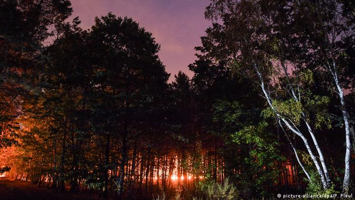 A forest lit in red from the fires (picture-alliance/dpa/P. Zinken)