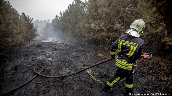 A fireman with a hose in a burnt forest in Brandenburg