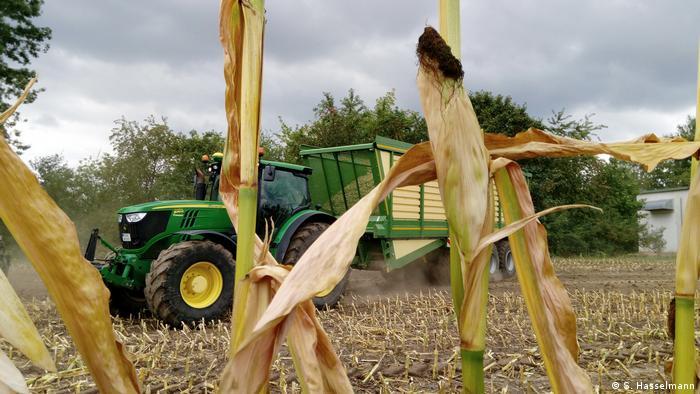 Сельское хозяйство в ЕС: в 2019 году улучшений не предвидится