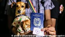 25.08.2018, Peru, Tumbes: Ein Flüchtling aus Venezuela mit einem Hund auf dem Arm hält seinen Pass. Kurz vor Inkrafttreten verschärfter Grenzkontrollen sind Tausende Migranten aus dem Krisenstaat Venezuela nach Peru ausgereist. In der Nacht zum Samstag (Ortszeit) kam es zu langen Schlangen am Grenzübergang zwischen Ecuador und der nordperuanischen Stadt Tumbes. Foto: Luis Iparraguirre/Agentur Andina/dpa +++ dpa-Bildfunk +++ |