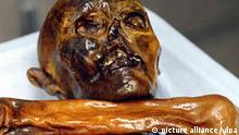 ARCHIV - Ansicht des Kopfes des Similaun-Mannes, kurz Ötzi genannt, im archäologischen Museum in Bozen in Südtirol (undatiertes Archivfoto). Der Gletschermann «Ötzi» ist Forschern zufolge innerhalb weniger Minuten verblutet. Der Mann wurde vor 5300 Jahren von hinten von einem Pfeil getroffen und starb so rasch, weil dabei eine große Arterie der linken Schulter verletzt wurde. Das berichtete die Universität Zürich am Mittwoch (06.06.2007). Foto: Südtiroler Archäologiemuseum (zu dpa 0657) +++(c) dpa - Bildfunk+++