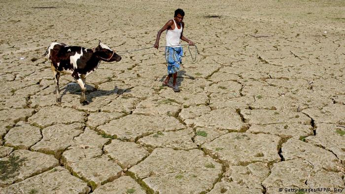 An Indian farmer walks with his cow on a dried paddy field at Srilankabasti village, on the outskirts of Agartala, the capital of northeastern state of Tripura