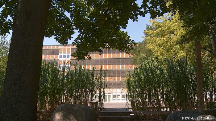 Vista del edificio de la escuela entre los verdes juncos.