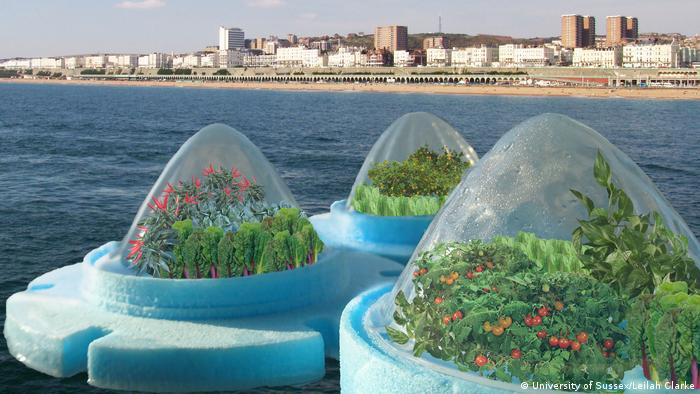 Floating vegetable farms in the sea, concept by Leilah Clark (University of Sussex)