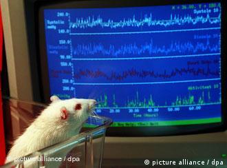 Подопытная мышь в лаборатории