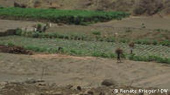 Nas proximidades da barragem do Poilão, no centro da ilha cabo-verdiana de Santiago, os agricultores tentam fazer frente à escassez de água com o sistema de irrigação gota a gota.