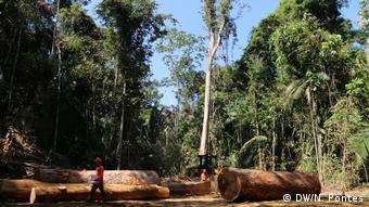 Troncos de árvores no chão em floresta