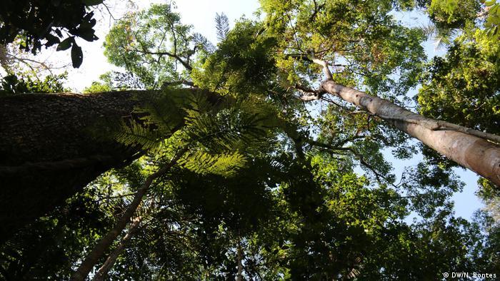 Brasilien Jamari National Forest (DW/N. Pontes)
