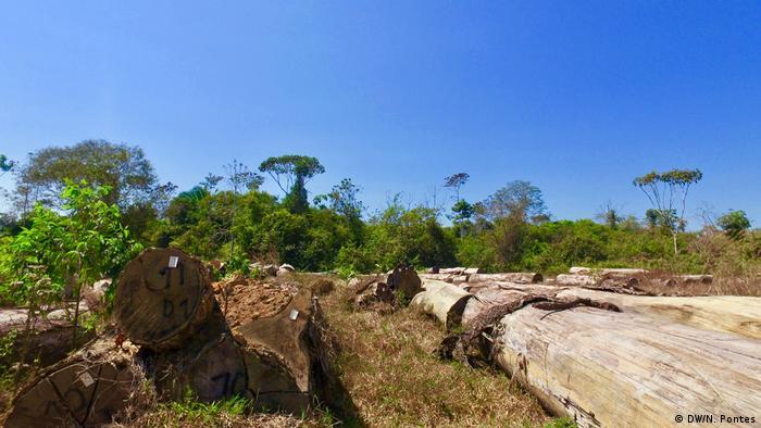 Floresta Nacional do Jamari