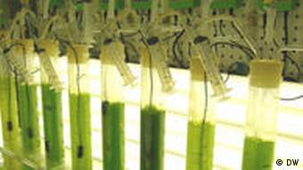 Algen zu Erdöl