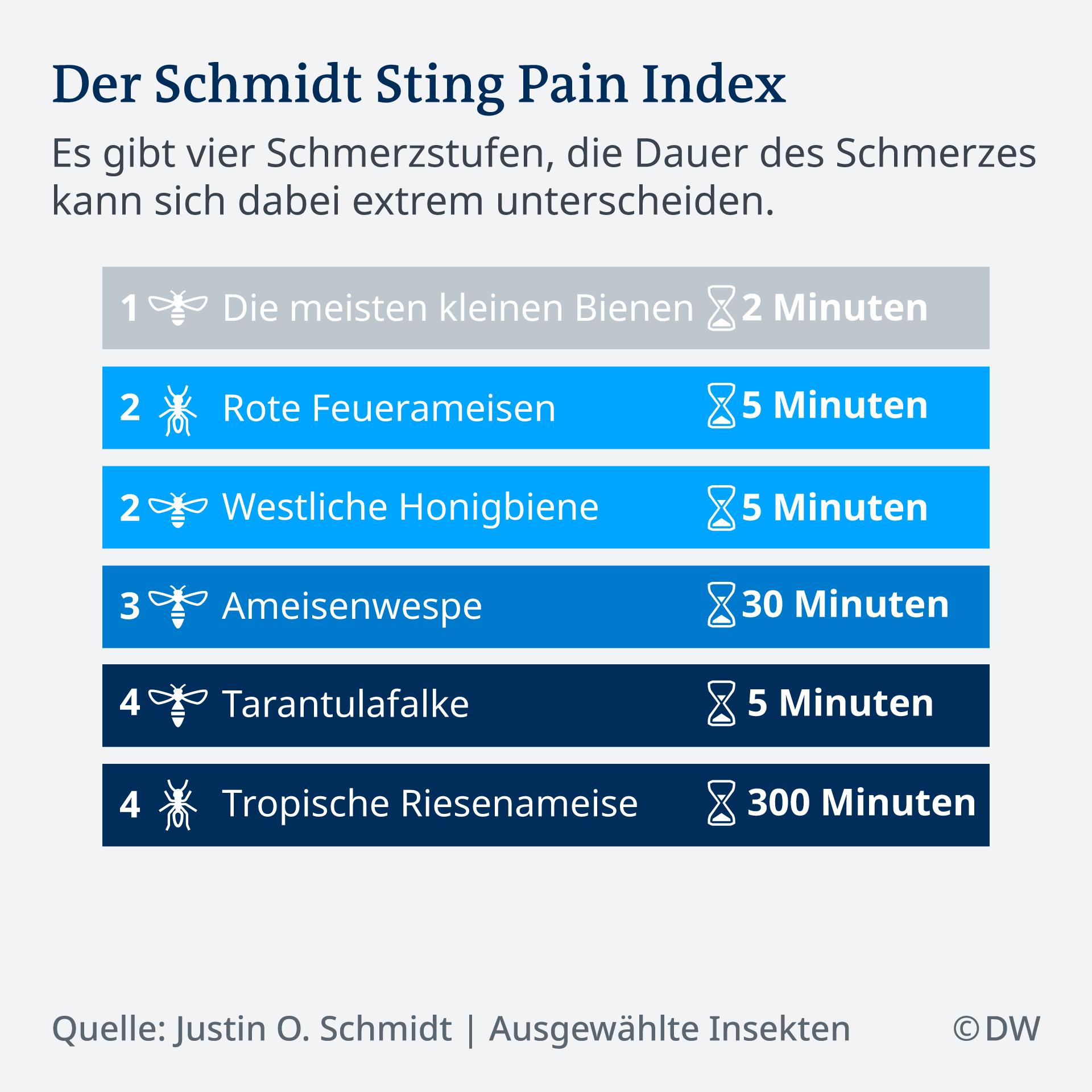 Schmerzskala 13