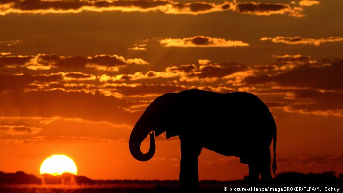 Silhouette of an elephant in Botswana