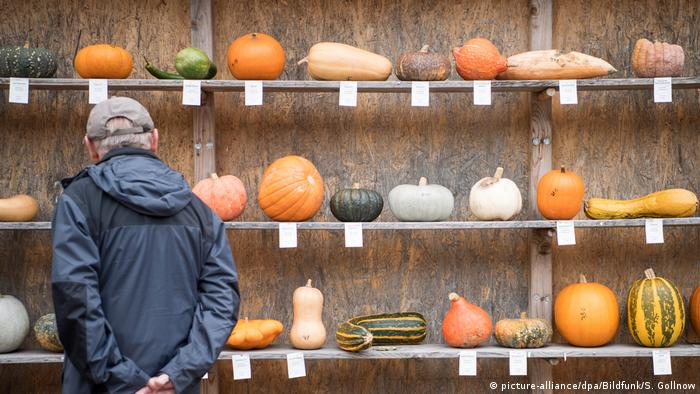 A man looks at different kinds of pumpkins displayed on shelves.