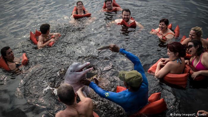 Tourist enjoy a swim with a dolphin