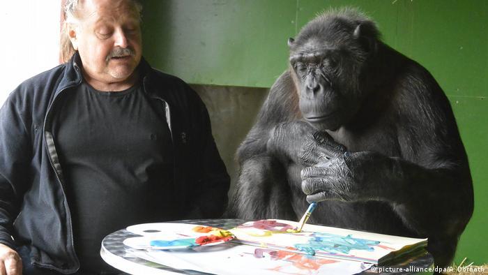Шимпанзе Робби любит рисовать