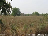 Campo de algodón cerca de Vangri (India): persistente sequía.