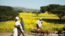 Ethiopian will celebrate 2011 New year on coming Tuesday 11.09.2018 Titel: Ethiopian will celebrate 2011 New year on coming Tuesday 11.09.2018 Autor/Copyright: Mekeit Teka Schlagworte: Ethiopia, Habesha , Gonder, Äthiopien