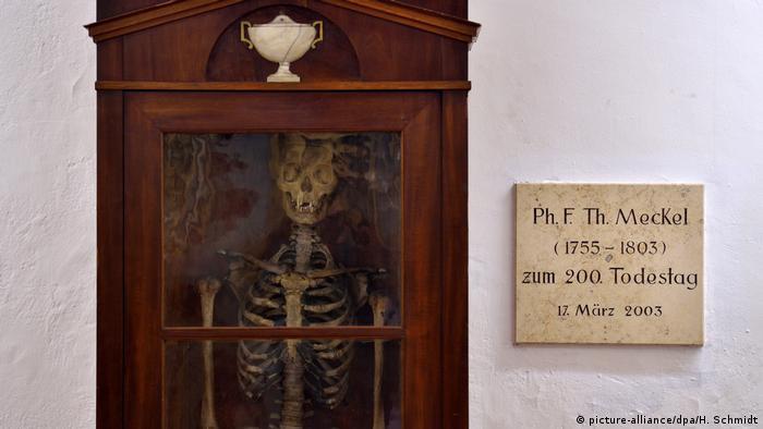 Скелет Філіппа Фрідріха Теодора Мекеля у анатомічній колекції університету Галле