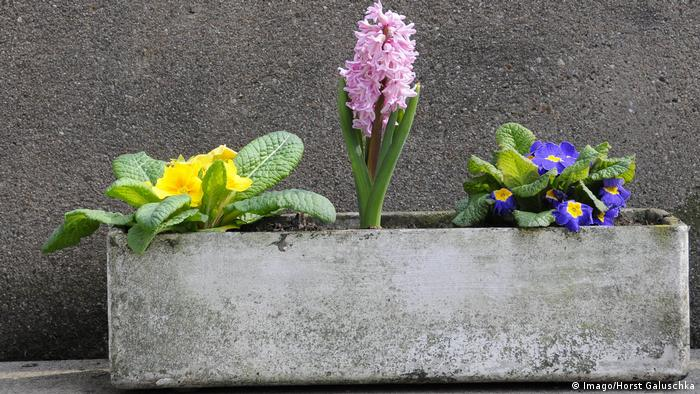 Blumenkasten aus Eternit (Imago/Horst Galuschka)