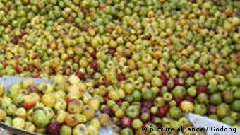 Apfelernte in Frankreich