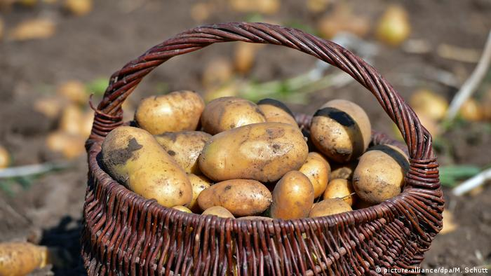 Basket of potatoes sitting outside on ground (picture-alliance/dpa/M. Schutt)