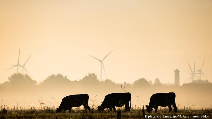 Картинки по запросу поле ветряков