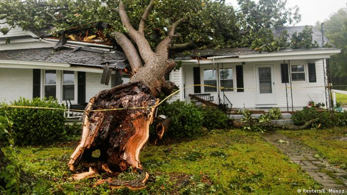 A tree rests on a house