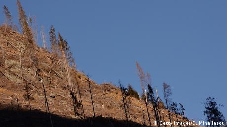 Multe păduri din România au fost defrișate (imagine din regiunea Făgăraș)