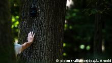 Friedwald in Dietzenbach Waldbestattung