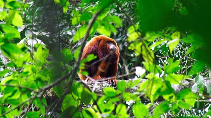 Otro destino que está despertando interés en esta zona es el Santuario de Flora y Fauna Otún Quimbaya.