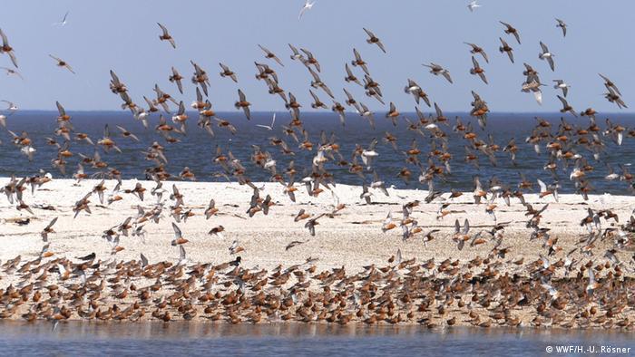 Wasservogelschwarm auf einer Sandbank in der Nordsee