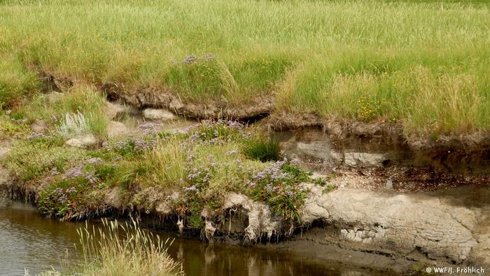 Grassy salt marsh