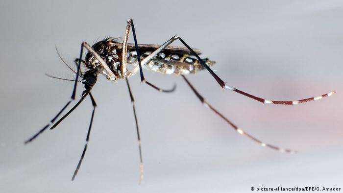 wie lange leben stechmücken