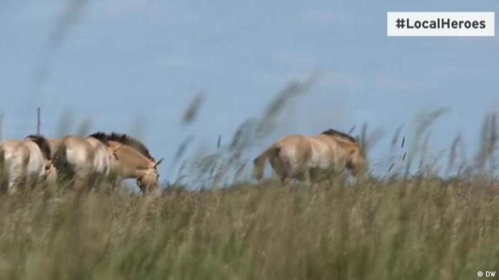 Візитівкою заповідника Асканія-Нова залишаються коні Пржевальського