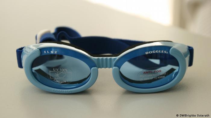 Brille für kurzsichtige Hunde in der Nahaufnahme (Foto: Brigitte Osterath)