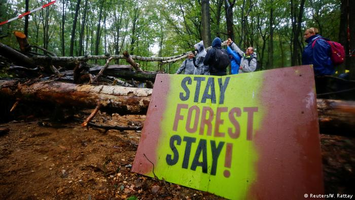 A sign in Hambach forest saying Stay Forest Stay!