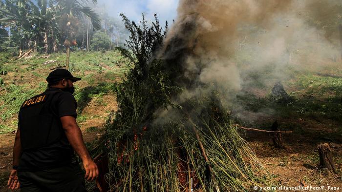 Police in Indonesia burning a crop of marijuana in 2018