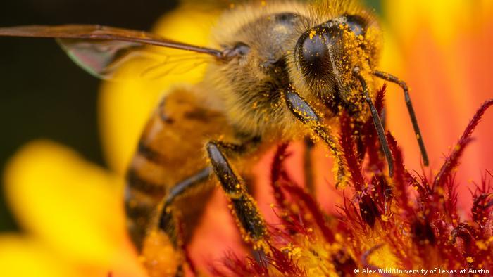 Foto em close de uma abelha sobre uma flor.