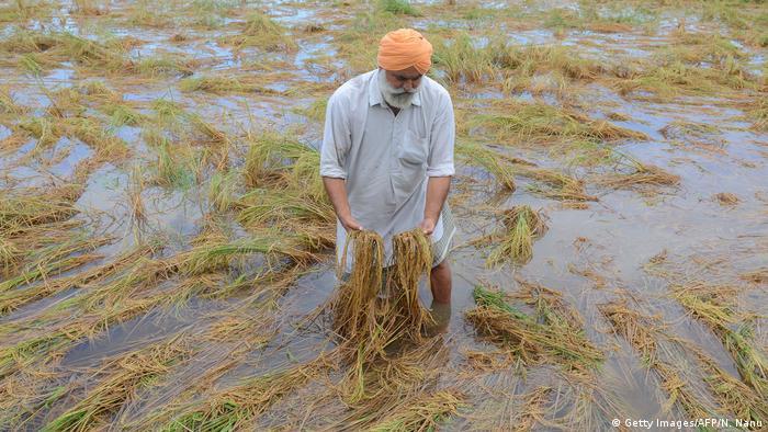 BdTD Indien Starkregen zerstört Reisfelder