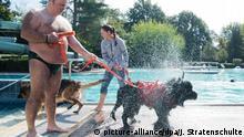 Deutschland Hundeschwimmen im Freibad Lehrte
