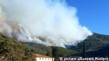 Forest fires near Pisa (picture-alliance/G.Masiero)